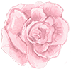 An illustration of a rose